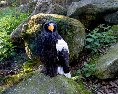 Bird of prey, France