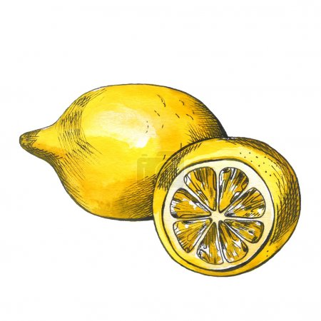 Hand drawn watercolor lemon sketch with ink contour
