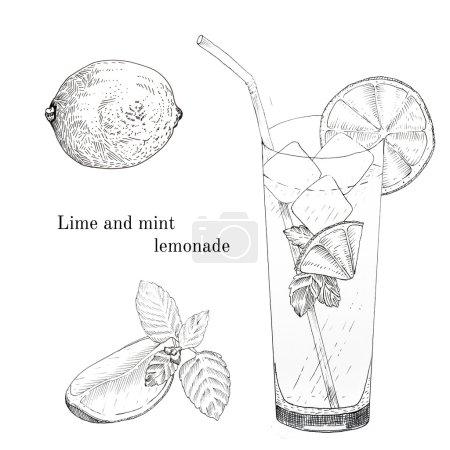 Illustration pour Ensemble de croquis à la lime et à la menthe à l'encre de limonade. Eléments de conception isolés - image libre de droit