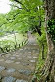 Walkway Lane Path With Green Trees in Forest. Beautiful Alley In