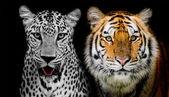 Vážnou tváří Leopard a tygr. (A najdete další zví