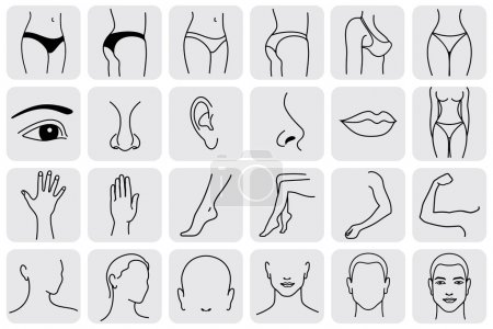 Illustration for Human body parts, medical vector icons. Body sculpting system - Royalty Free Image