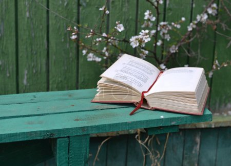 Book under blooming cherry tree
