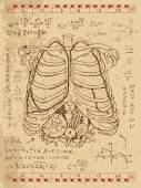 Set of drawings with human chest bones