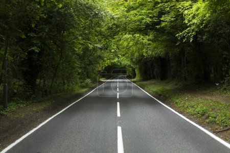Horizontal view of country road surrounded by forest trees