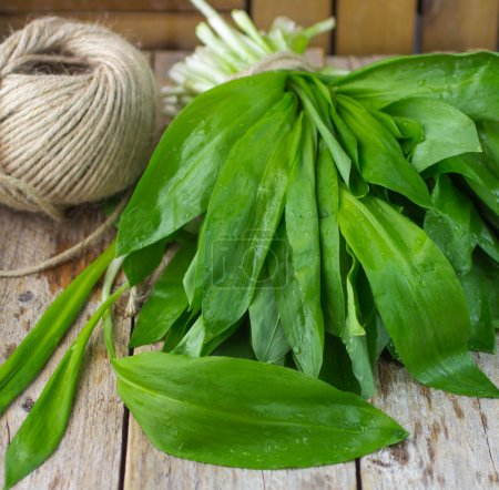 Photo for Ramson (bear garlic) bunch tied with rope on old wooden background - Royalty Free Image
