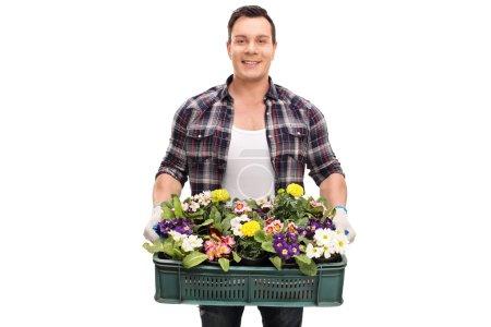 Gardener holding a crate full of flowers