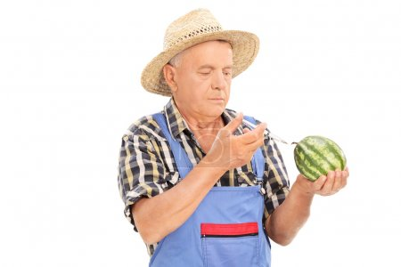 Farmer injecting chemicals into watermelon