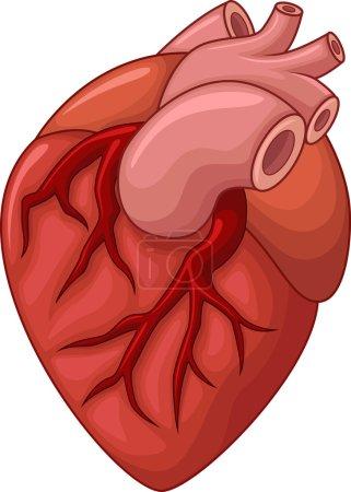 Illustration Of Human heart cartoon illustration...