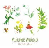 Wildflowers watercolor design elements set