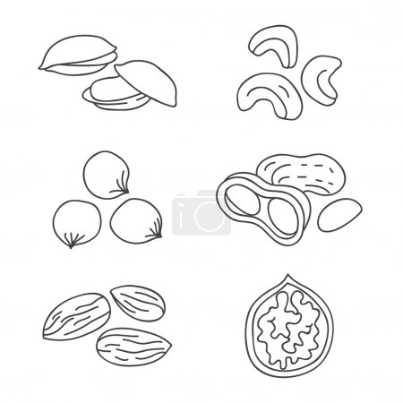 Nuts. Vector icons