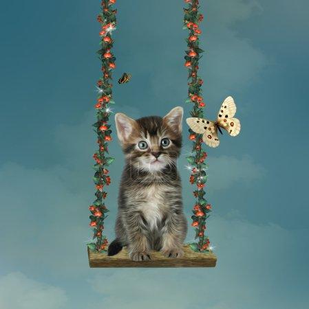 Little cat in a hammock
