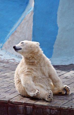 The small polar bear sits on a floor