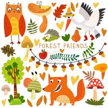 Woodland and Forest Animals.