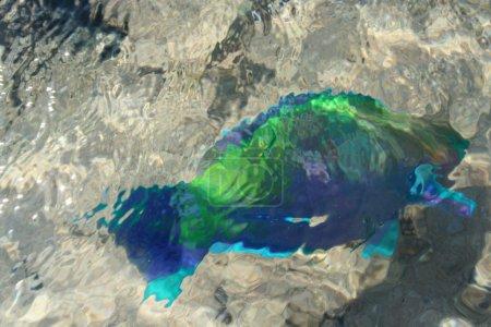 Photo pour Fond indistinct sur les poissons brillants dans le Se rouge - image libre de droit