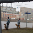 Постер, плакат: Russian police and dogs on oppositional march
