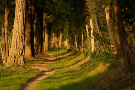 Photo for Idyllic forest path in warm evenign light - Royalty Free Image