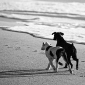 Black and white picture of two dogs at a beach
