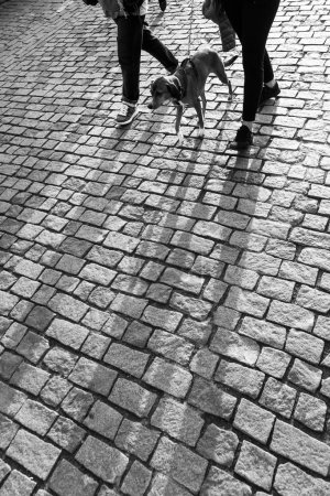 Black and white picture of long shadows of a couple with a dog with backlit on cobblestone pavement