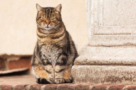 Foto de Lindo gato callejero - Imagen libre de derechos