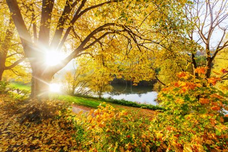 autumn trees at the Moselle in Trier, Germany
