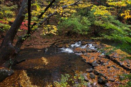 Autumn, South Korea