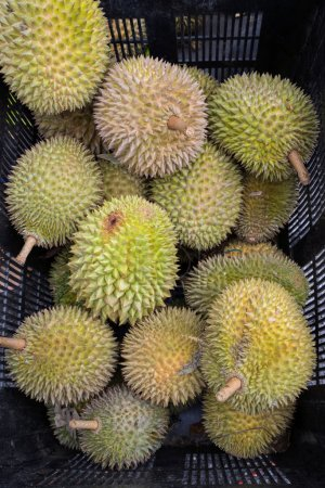 Photo for Crate of thorny durian fruits for sale - Royalty Free Image
