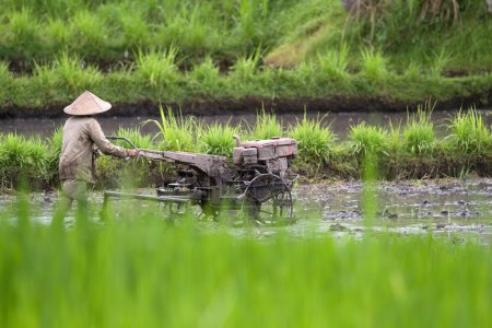 paddy farmer, Bali, Indonesia