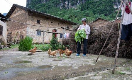 Farm work in Guangxi, China.