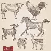 Engraving style pen pencil crosshatch hatching paper painting retro vintage vector lineart illustration domestic farm animals pets set Goat and cow horse bulldog lamb and rooster