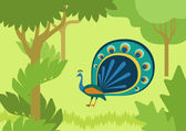 Peacock with flowing tail in forest