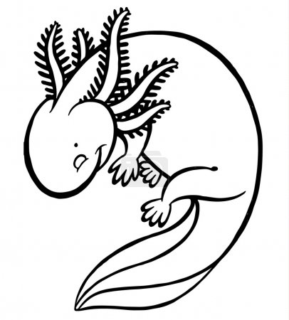 Mexicanum axolotl vector illustration - Ambystoma ...