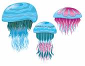 various fantastic jellyfishes