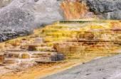 Yellowstone, Travertine Terrace, Mammoth Hot Springs