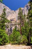 Yosemite Waterfalls behind forest in Yosemite National Park