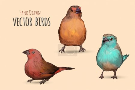 Exotic birds. Hand illustrate
