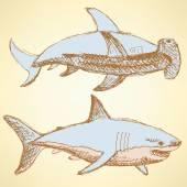 Náčrt děsivé žraloky v retro stylu