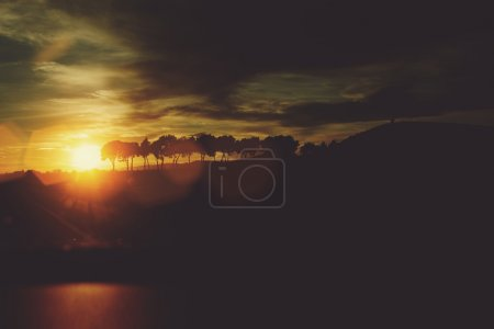 Photo for Beautiful landscape of a trees with evening sky and sunset on background, amazing clouds and sun rays in countryside, fascinating nature against twilight - Royalty Free Image