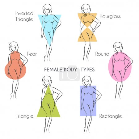 Illustration for Female body types anatomy. Main woman figure shape, free font used. - Royalty Free Image