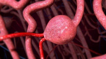 Photo pour Anatomie des néphrons humains. Illustration 3d - image libre de droit