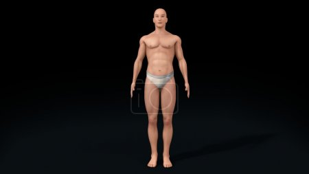 human healthy body medical concept