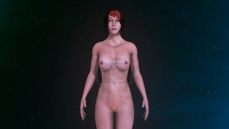 human organs and body anatomy