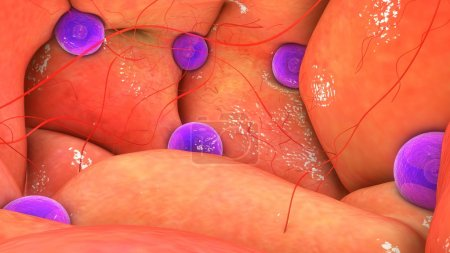 female ovary anatomy