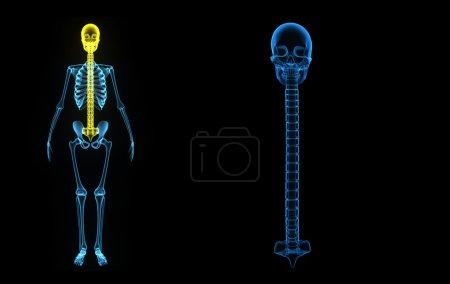 Back bone with Skull back