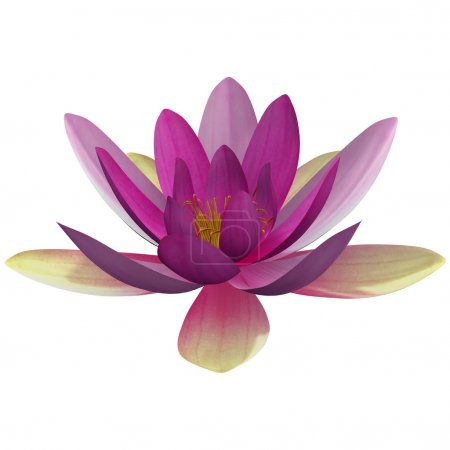 Photo pour Nymphaea is a genus of hardy and tender aquatic plants in the family Nymphaeaceae. The genus has a cosmopolitan distribution. - image libre de droit