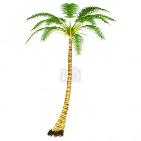 Photo for Cocos Tree isolated on white background - Royalty Free Image