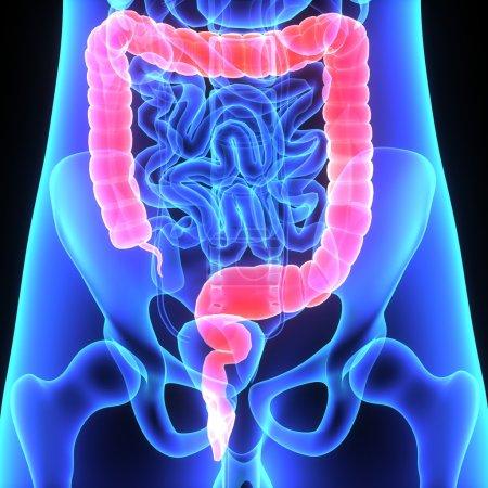 Large intestine anterior x-ray view