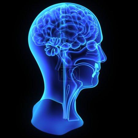 Photo pour Anatomie tête bleu, isolée sur fond noir - image libre de droit