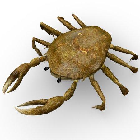 Crab, sea creature