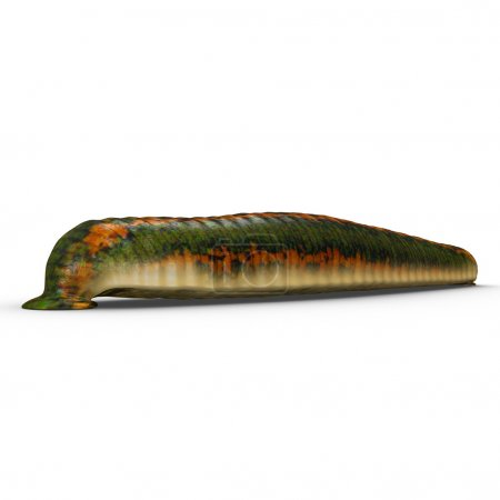 Hirudo, genus of leeches